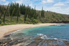 Nowa Caledonia krajobrazu nabrzeżna plaża z sosnami fotografia stock