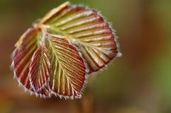 nowa liść wiosna Fotografia Stock