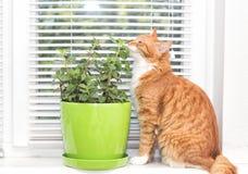 Nowa roślina i kot, Zdjęcie Stock