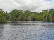 Nowa rzeka w Belize Zdjęcia Stock