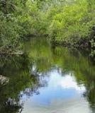 Nowa rzeka w Belize Obrazy Stock