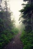 Nowa Scotia mgła Obraz Stock