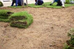 Nowa trawa, zasadzać nowy darniuje trawy obraz royalty free