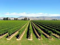 nowa winnica Zelandii Zdjęcie Royalty Free