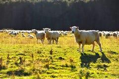 Nowa Zelandia czysta natura Zdjęcia Stock
