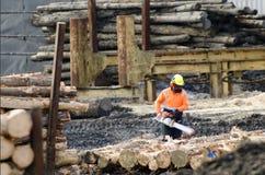 Nowa Zelandia Lasowi produkty Zdjęcie Stock