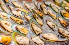 Nowa Zelandia lipped mussel obrazy stock