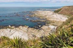 Nowa Zelandia lna dorośnięcie na nabrzeżnych falezach blisko Kaikoura, Nowa Zelandia Obrazy Stock