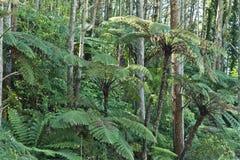 Nowa Zelandia miejscowy Bush zdjęcie stock