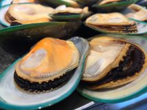 Nowa Zelandia mussels Obrazy Stock