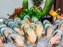 Nowa Zelandia mussels bufet w owoce morza restauraci obraz stock