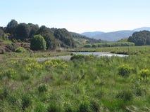 Nowa Zelandia południowej wyspy połowu pstrągowy strumień Obraz Royalty Free