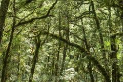 Nowa Zelandia tropikalny las deszczowy Zdjęcia Stock