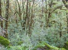 Nowa Zelandia tropikalny las deszczowy Zdjęcie Royalty Free