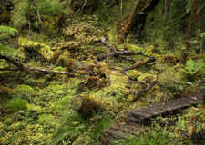 Nowa Zelandia tropikalny las deszczowy Obraz Stock