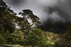 Nowa Zelandia tropikalny las deszczowy Nowa Zelandia d Y Fotografia Royalty Free