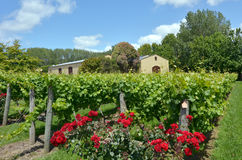 Nowa Zelandia wino Obraz Royalty Free