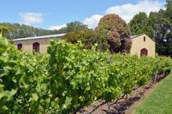 Nowa Zelandia wino Zdjęcia Royalty Free