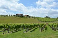 Nowa Zelandia wino Fotografia Royalty Free
