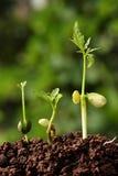 nowe życie rośliny Obrazy Royalty Free