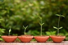 nowe życie rośliny Obrazy Stock