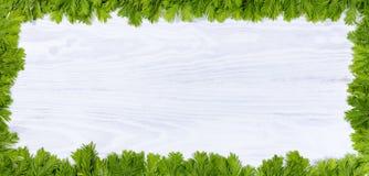 Nowe jedlinowe gałąź porady na białym drewnie dla rocznych wakacji Zdjęcia Royalty Free