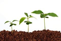 nowe lfie rośliny Fotografia Stock
