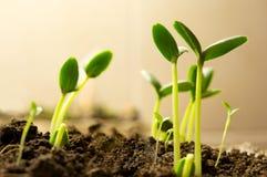 nowe rośliny fotografia stock