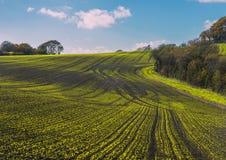 Nowe uprawy w Combe dolinie, Wschodni Sussex, Anglia zdjęcie royalty free