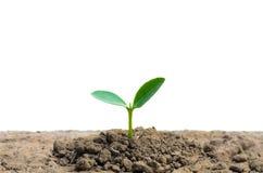 Nowego życia mały drzewo Zdjęcia Stock