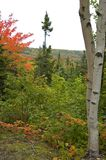 nowej szkocji brzozy drzewa obrazy royalty free