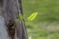 nowi liść drzewa Zdjęcie Royalty Free