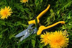 Nowi ogrodowi nożyce Zdjęcie Royalty Free