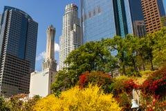 Nowożytni budynki i okwitnięć drzewa W centrum Los Angeles, piękna wiosna zdjęcie royalty free