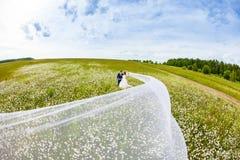 Nowożeńcy z bardzo tęsk bridal przesłona zdjęcie stock