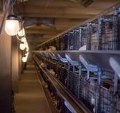 Nowożytna kurczak klatka hennery, w którym hodują dla spożycia w jedzeniu broiler kurczaki zdjęcie stock