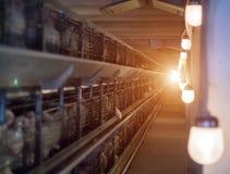 Nowożytna kurczak klatka słońce, w którym hodują dla spożycia w jedzeniu broiler kurczaki obraz royalty free