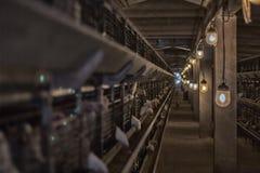 Nowożytna kurczak klatka w którym hodują dla spożycia w jedzeniu broiler kurczaki, farma drobiu, zmierzch fotografia royalty free