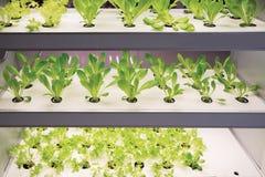 Nowożytna rolnicza rośliny fabryka Obrazy Royalty Free