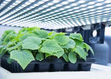 Nowożytna rolnicza rośliny fabryka Zdjęcie Royalty Free