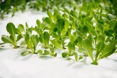 Nowożytna rolnicza rośliny fabryka Zdjęcia Royalty Free
