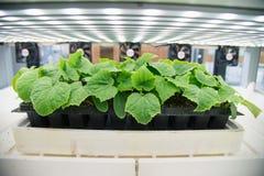 Nowożytna rolnicza rośliny fabryka Zdjęcie Stock