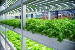 Nowożytna rolnicza rośliny fabryka Obraz Stock