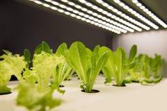 Nowożytna rolnicza rośliny fabryka Fotografia Stock