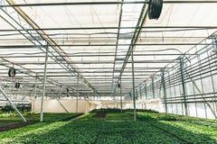 Nowożytna wielka szklarnia, cieplarnia, kultywacja lub wzrostowi ziarna ornamentacyjne rośliny, kwiat pepiniera wśrodku wnętrza obrazy stock