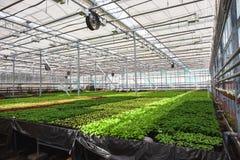 Nowożytna wielka szklarnia, cieplarnia, kultywacja lub wzrostowi ziarna ornamentacyjne rośliny, kwiat pepiniera wśrodku wnętrza zdjęcie royalty free