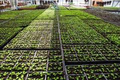 Nowożytna wielka szklarnia, cieplarnia, kultywacja lub wzrostowi ziarna ornamentacyjne rośliny, kwiat pepiniera wśrodku wnętrza fotografia stock