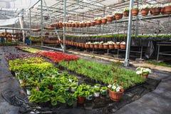 Nowożytna wielka szklarnia, cieplarnia, kultywacja lub wzrostowi ziarna ornamentacyjne rośliny, kwiat pepiniera wśrodku wnętrza zdjęcia royalty free