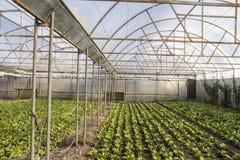 Nowożytny gospodarstwo rolne dla narastającej sałaty Zdjęcie Royalty Free