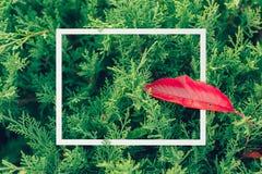 Nowożytny kreatywnie sztuki zieleni natury ramy projekt obrazy stock